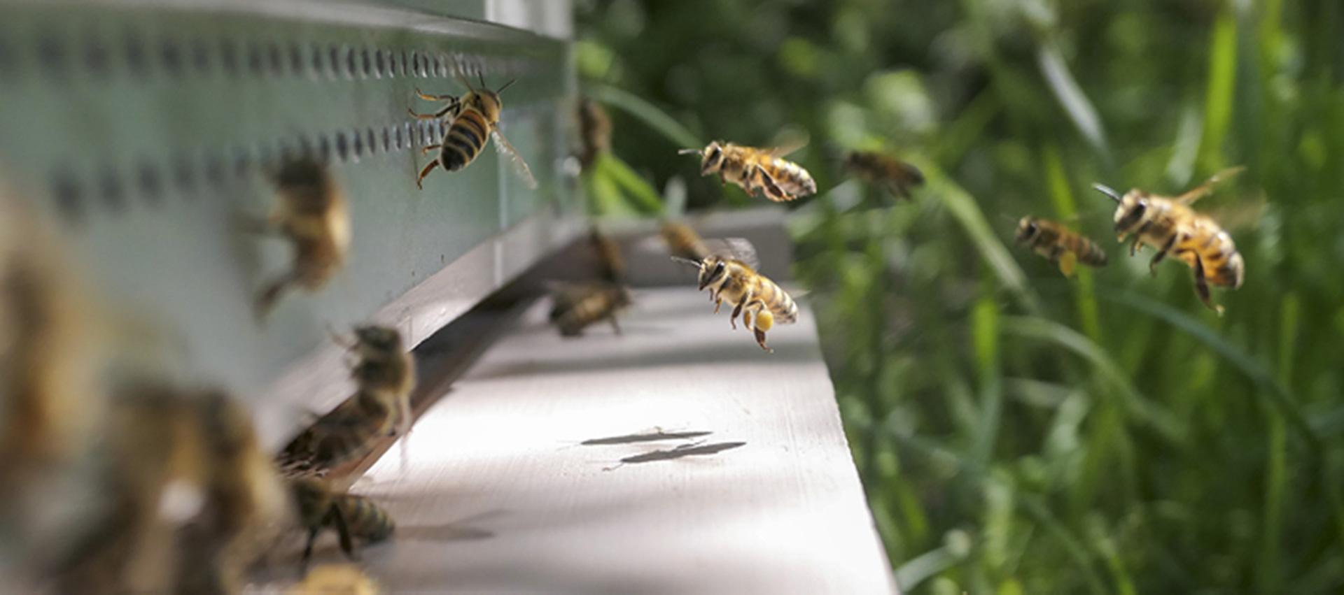 Cosack-Druck-Fleissige-Bienen