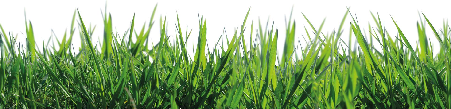 Cosack-Druck-Grasflaeche-Nachhaltigkeit